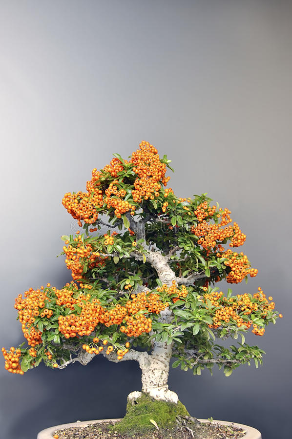 Orange berries. royalty free stock photos