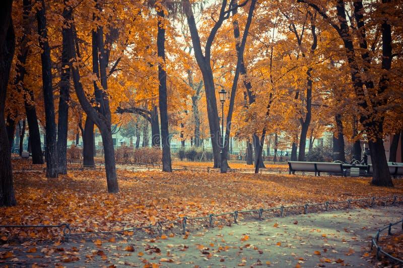 Orange Blätter auf Bäumen, Herbstpark, Herbstlandschaft stockfotos