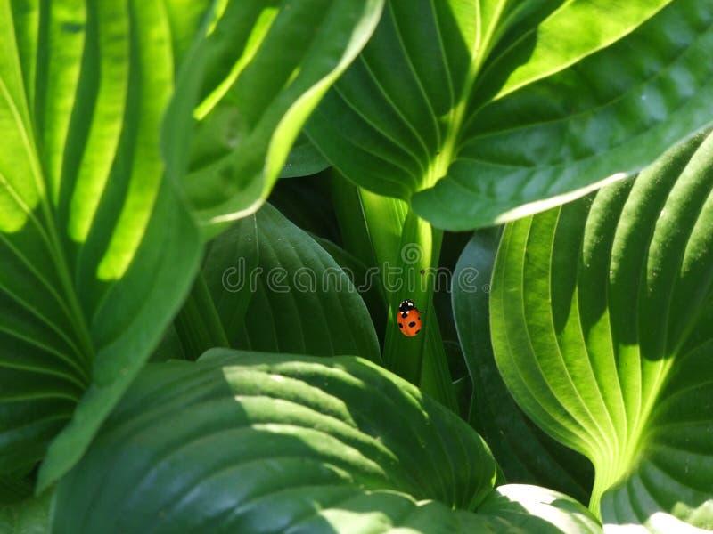Orange and Black Beetle royalty free stock photo