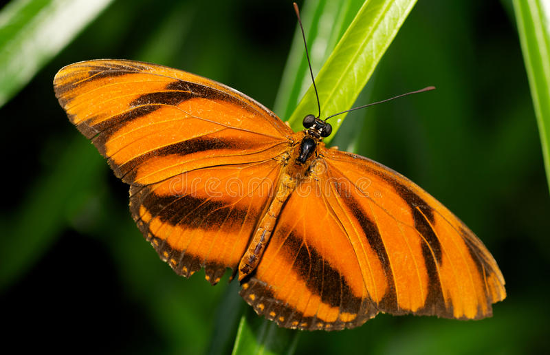 Download Orange and Black Butterfly stock image. Image of biology - 17293365