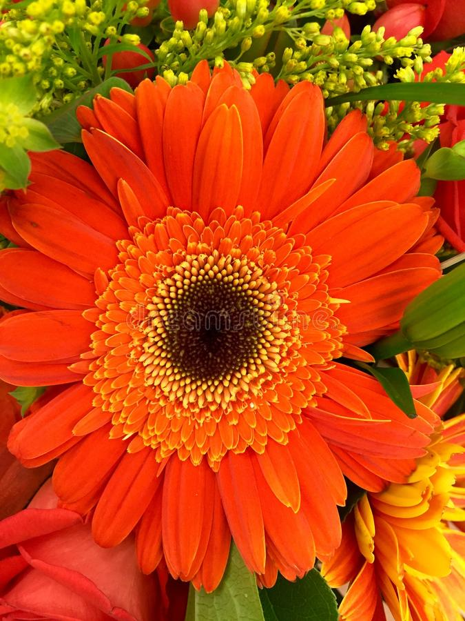 Orange And Black Petaled Flower In A Close Up Photography During Daytime Free Public Domain Cc0 Image