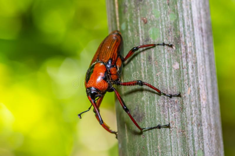 Orange with black striped insect. On green leaf in forest royalty free stock photography