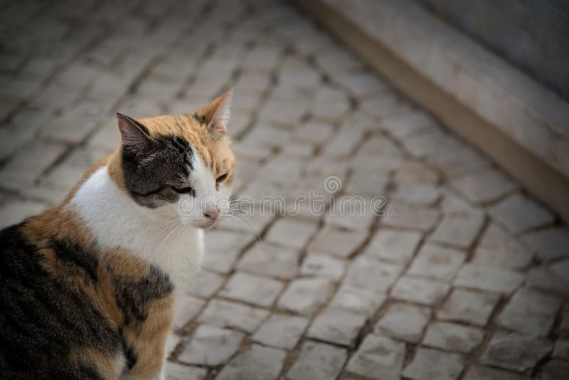Orange black and white alley cat. Close up of a happy, healthy, orange black and white alley cat royalty free stock image