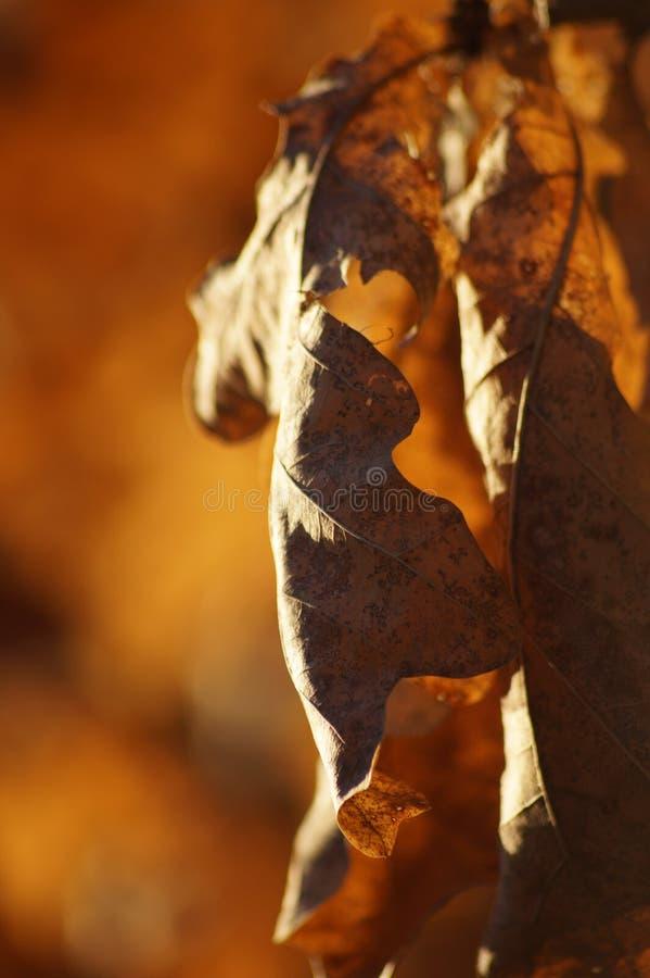 Orange Blatt in der Herbstlandschaft stockbilder