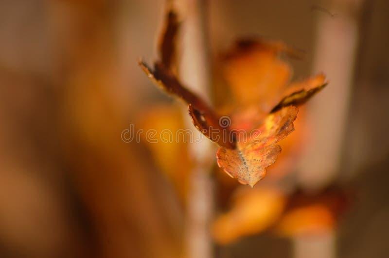 Orange Blattdetail mit braunem Hintergrund lizenzfreie stockfotografie