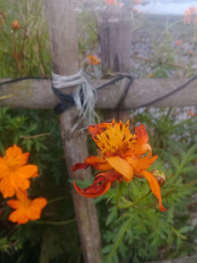 Orange blomma royaltyfria foton