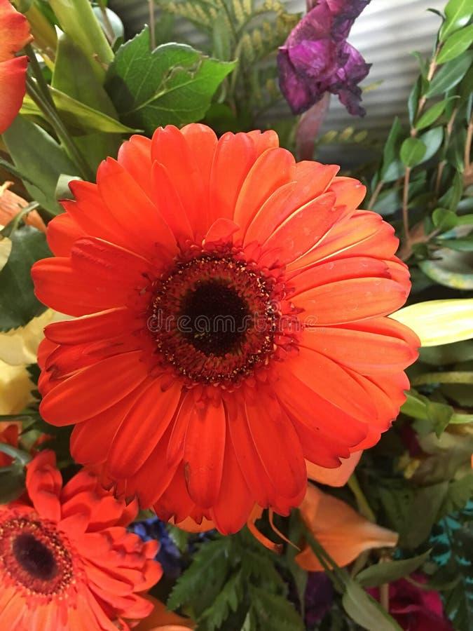 Orange blomma arkivbild