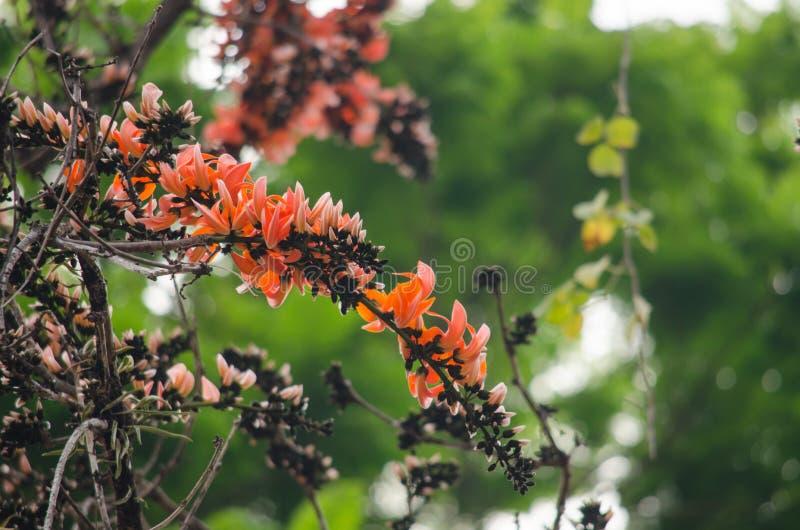 Orange blomma i natur fotografering för bildbyråer