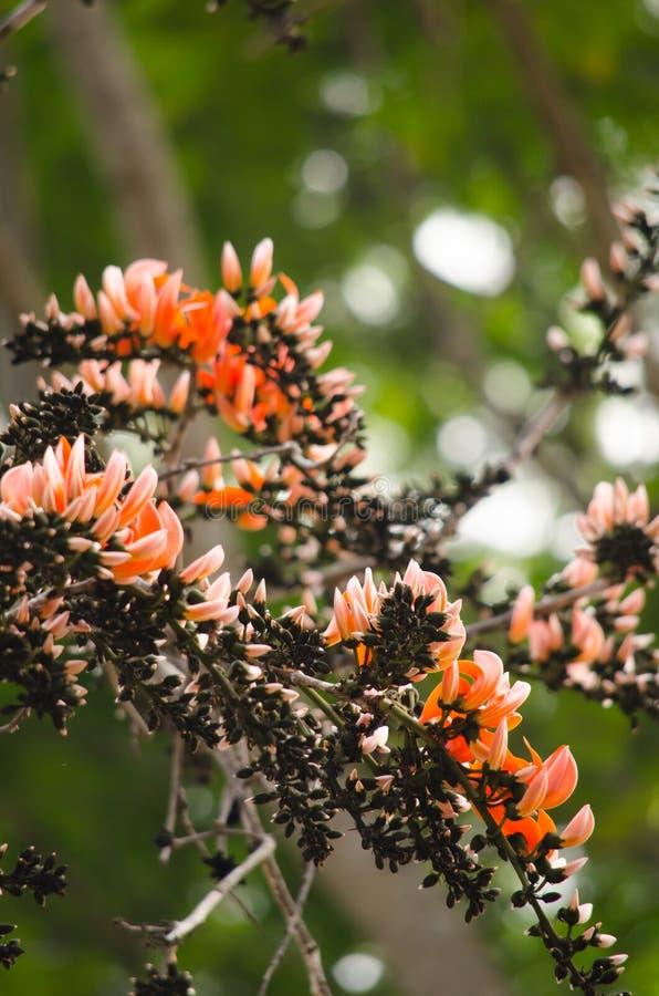 Orange blomma i natur arkivfoton