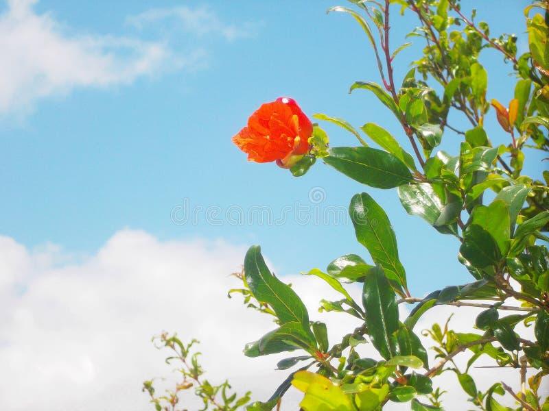 Orange blomma och blå himmel royaltyfria foton