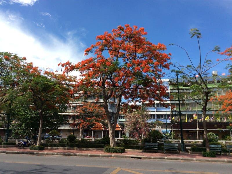 Orange blomma och blå himmel arkivfoto