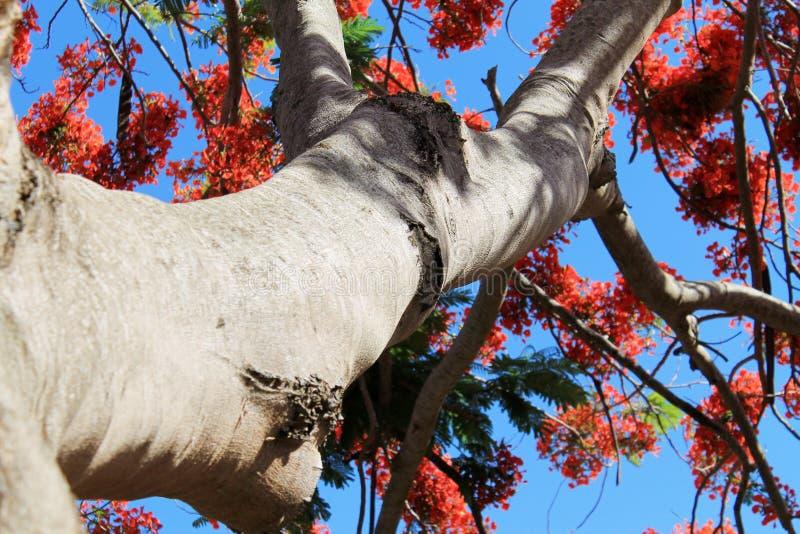 Orange blommaträd mot blå himmel royaltyfri foto