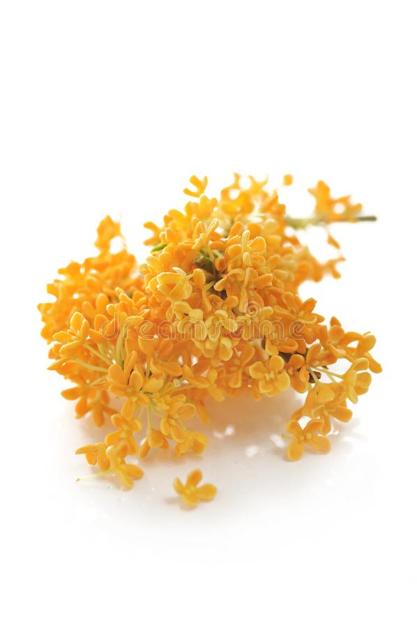 Orange blommor av den söta osmanthusen royaltyfri fotografi