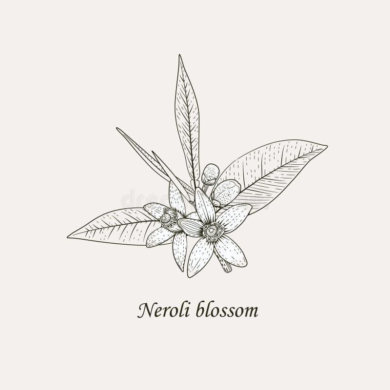 Orange blommor räcker den svartvita dra vektorillustrationen stock illustrationer