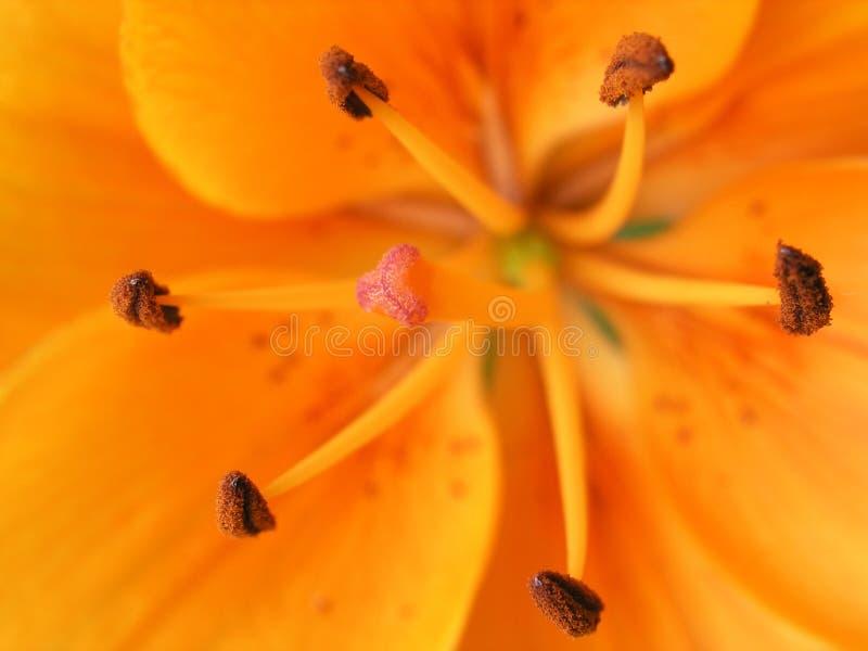 Orange bloom stock photography