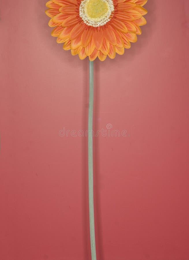 Orange Blume 2 stockfotos