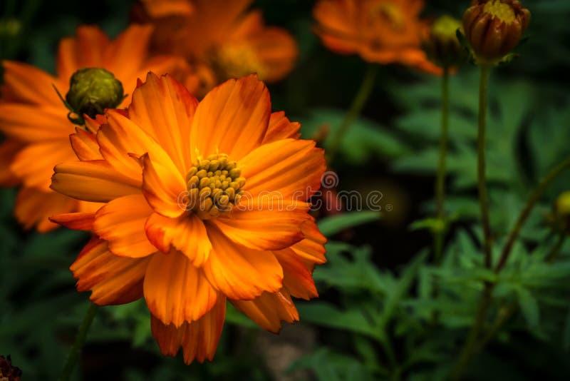 Orange Blume auf grünen Blättern stockbilder
