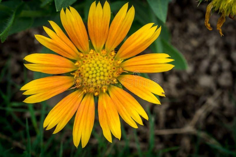 Orange Blume auf grünen Blättern lizenzfreie stockfotos