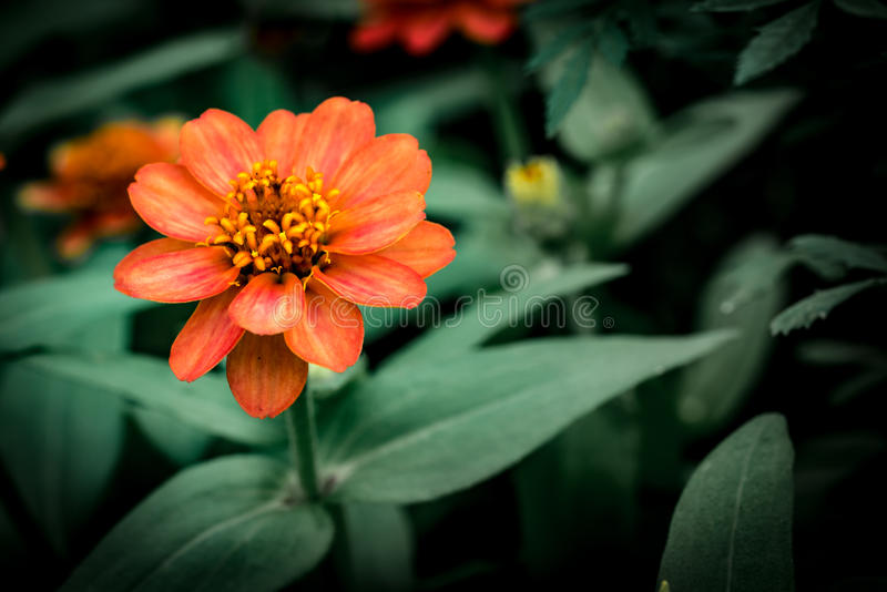 Orange Blume auf grünen Blättern lizenzfreie stockbilder