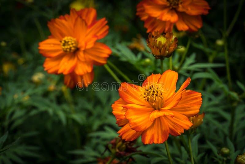 Orange Blume auf grünen Blättern lizenzfreies stockfoto