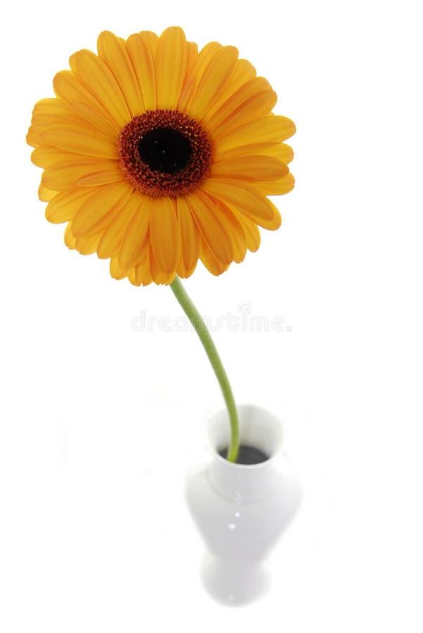 Orange Blume im Vase lizenzfreie stockbilder