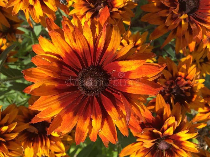 Orange Blumen stockbild