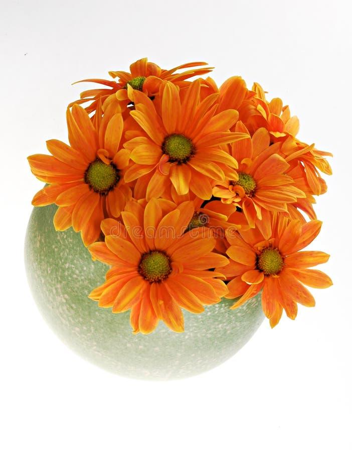 Orange Blumen stockfoto