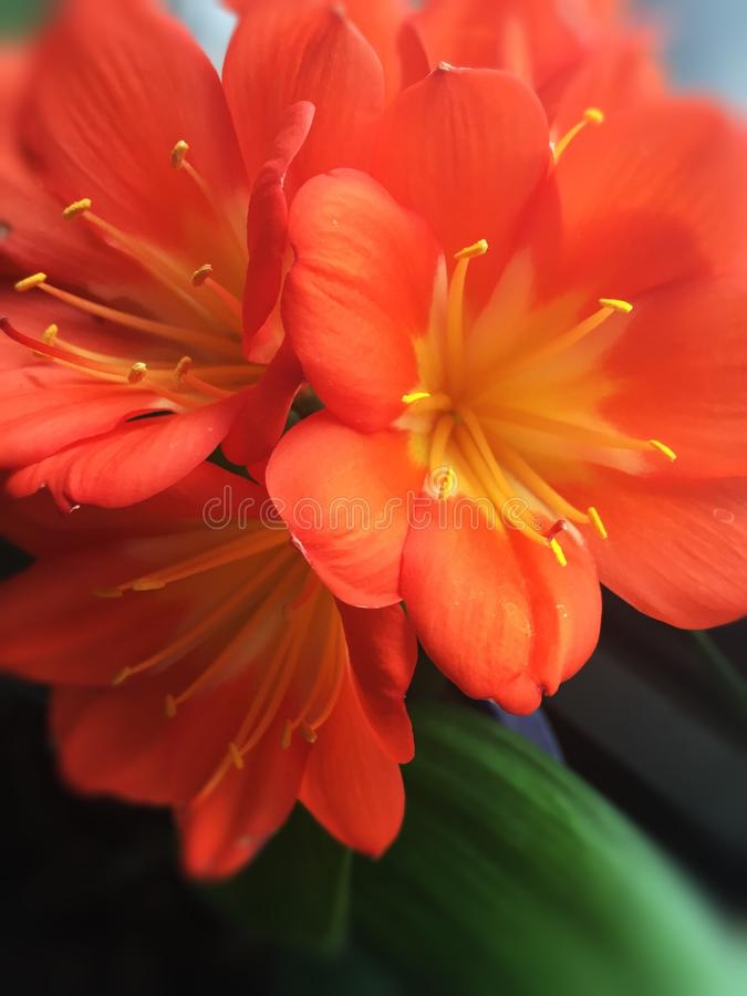 Orange Blumen stockbilder
