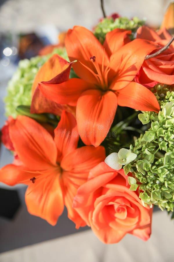 Orange Blumen in der Blüte lizenzfreies stockfoto