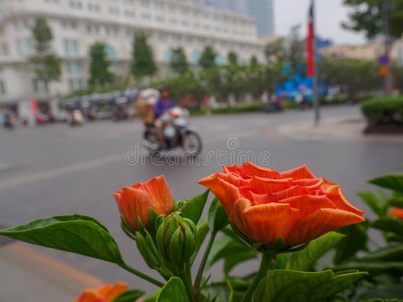 Orange Blumen im Hintergrund sind Straßen stockbild