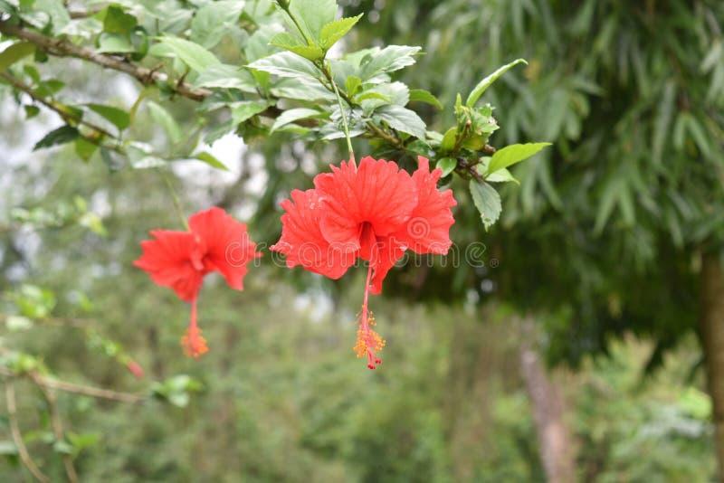 Orange Blumen und Blätter im Garten stockfotografie