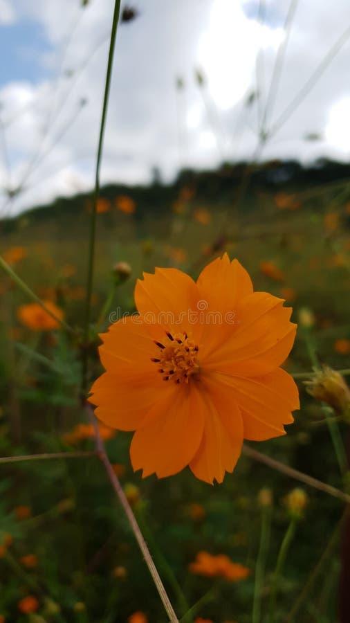 Orange Blumen Wiese stockbild