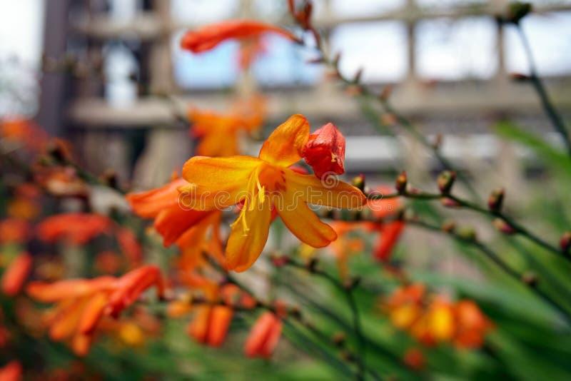 Orange Blumenabschluß oben stockbilder