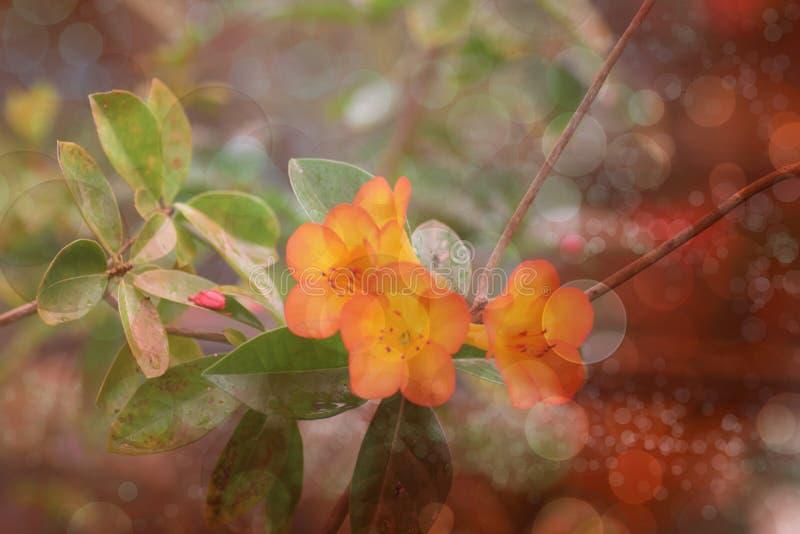 Orange Blumenillustration stockfoto