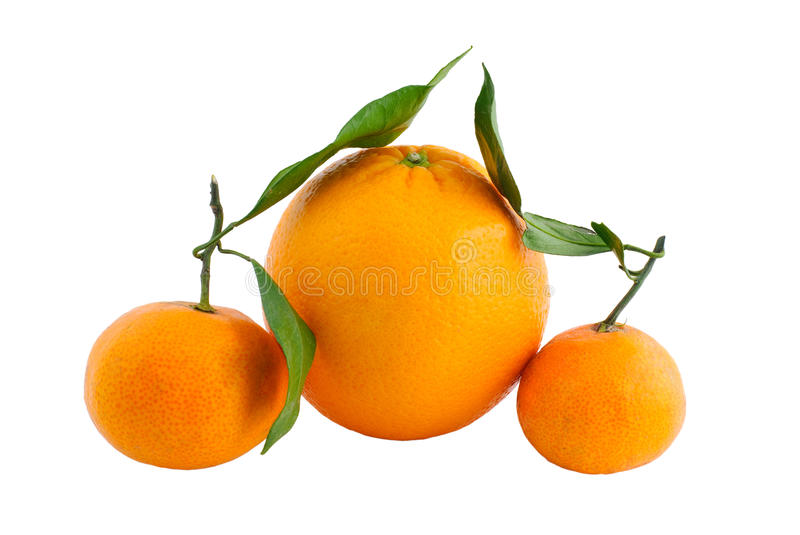 Download Orange with branch stock image. Image of leaf, sweet - 12482747