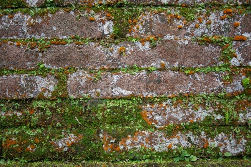 Orange Brick With Moss Royalty Free Stock Photography