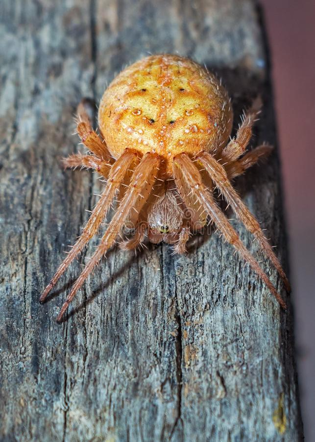 Orange And Brown Spider Free Public Domain Cc0 Image