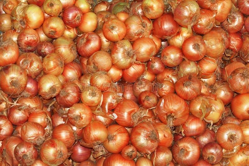Download Orange Bulb Onion Relish Shine Stock Photo - Image: 22853746