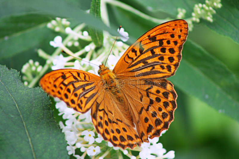 Download Orange Butterfly Stock Images - Image: 26577214
