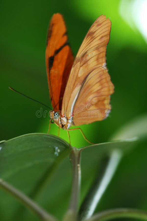 Orange butterfly stock images