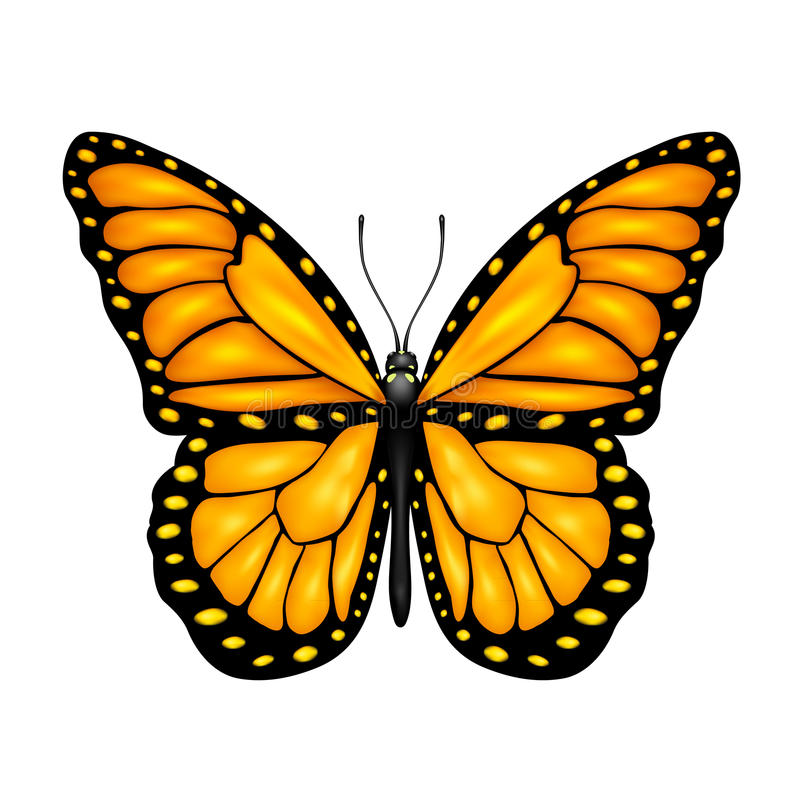 Free Orange Butterfly Royalty Free Stock Image - 38869006