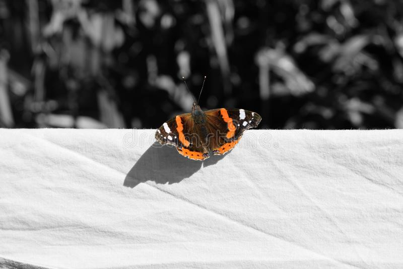 19 511 Orange Butterfly Black Background Photos Free Royalty Free Stock Photos From Dreamstime