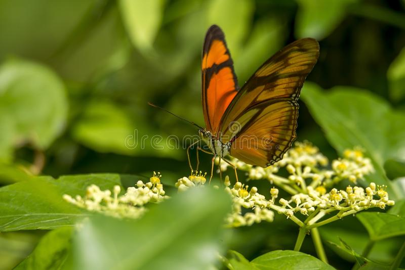 Orange Butterfly On Flowers Free Public Domain Cc0 Image