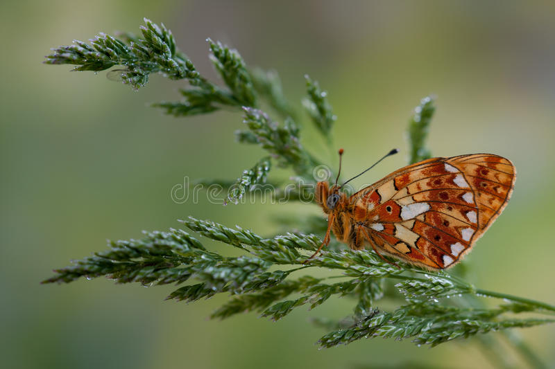 Orange butterfly on the grass. Orange butterfly on the green grass stock photography