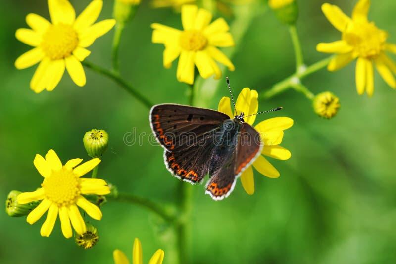 Orange butterfly on grass, macro stock photos