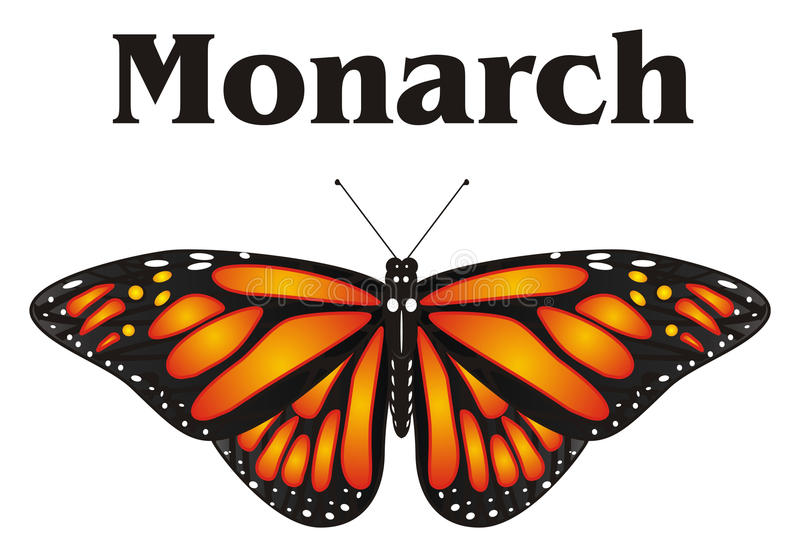 orange butterfly and her name stock illustration illustration of rh dreamstime com monarch butterfly cartoon drawings monarch butterfly cartoon drawings