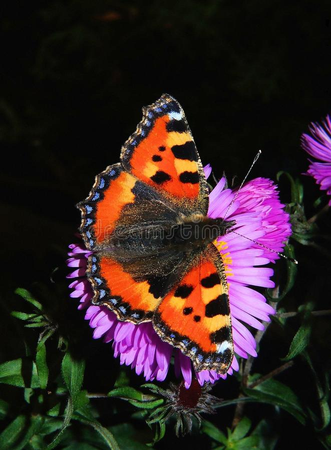 Orange Butterfly On Purple Flower Free Public Domain Cc0 Image