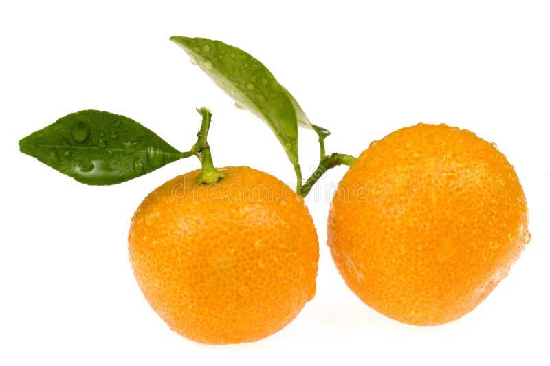 orange calamondisfrukter arkivbilder