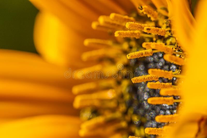 Orange callendula royalty free stock photography