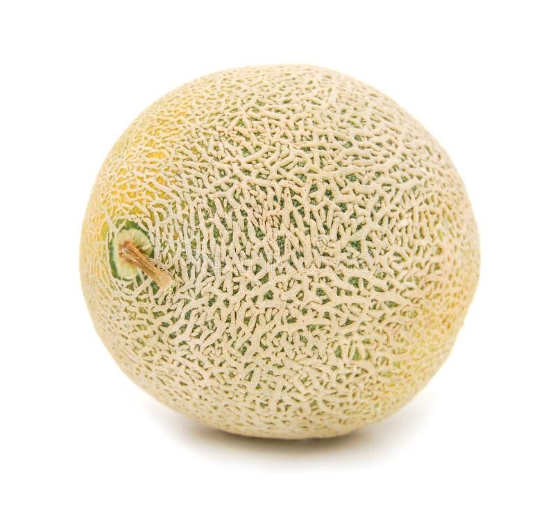 Orange cantaloupe melon. On white background stock images